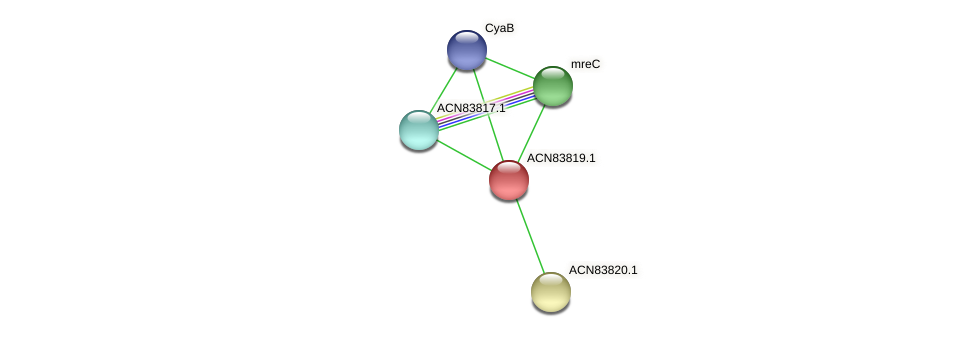 ACN83819.1 protein (Brachyspira hyodysenteriae) - STRING interaction network