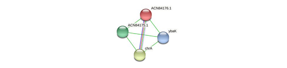 ACN84176.1 protein (Brachyspira hyodysenteriae) - STRING interaction network