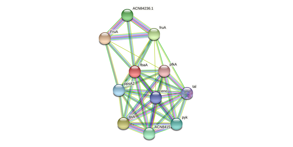 fbaA protein (Brachyspira hyodysenteriae) - STRING interaction network