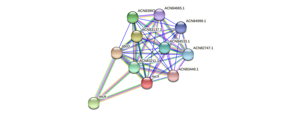 recX protein (Brachyspira hyodysenteriae) - STRING interaction network