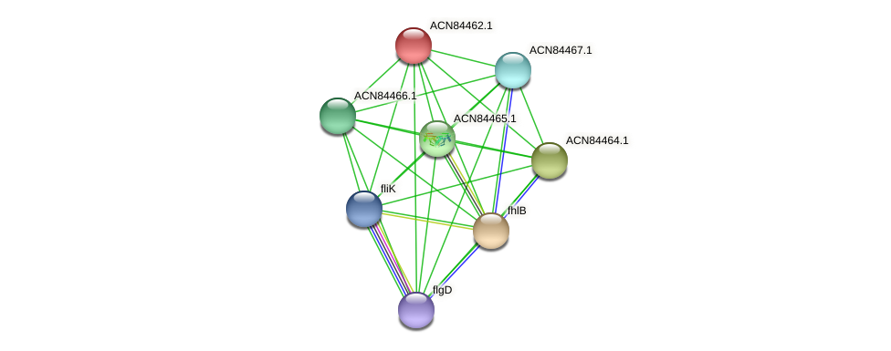 ACN84462.1 protein (Brachyspira hyodysenteriae) - STRING interaction network