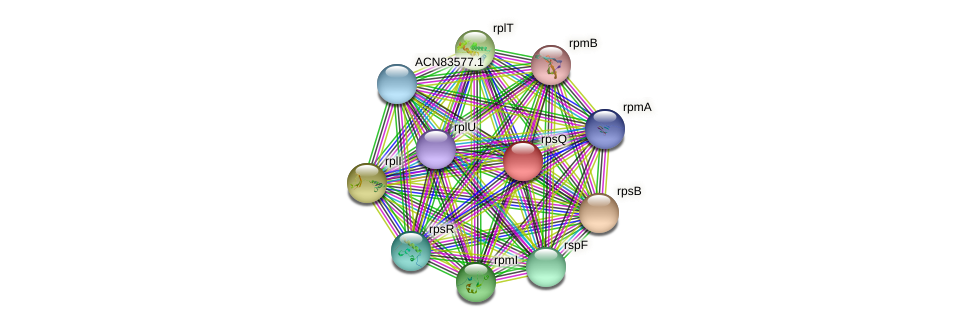 rpsQ protein (Brachyspira hyodysenteriae) - STRING interaction network