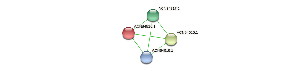 ACN84616.1 protein (Brachyspira hyodysenteriae) - STRING interaction network