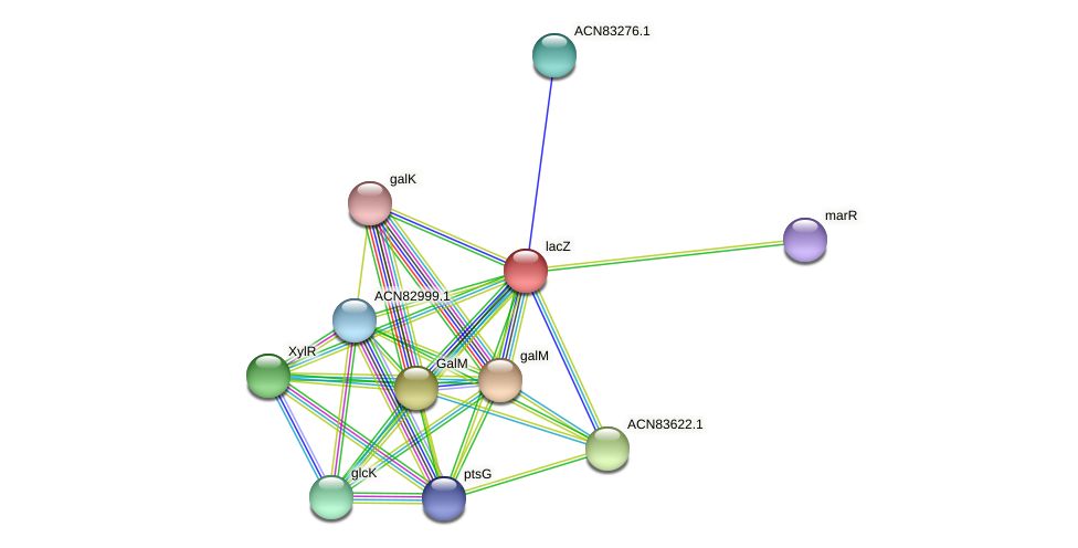 lacZ protein (Brachyspira hyodysenteriae) - STRING interaction network