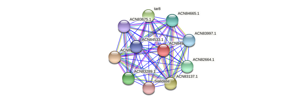 ACN84999.1 protein (Brachyspira hyodysenteriae) - STRING interaction network