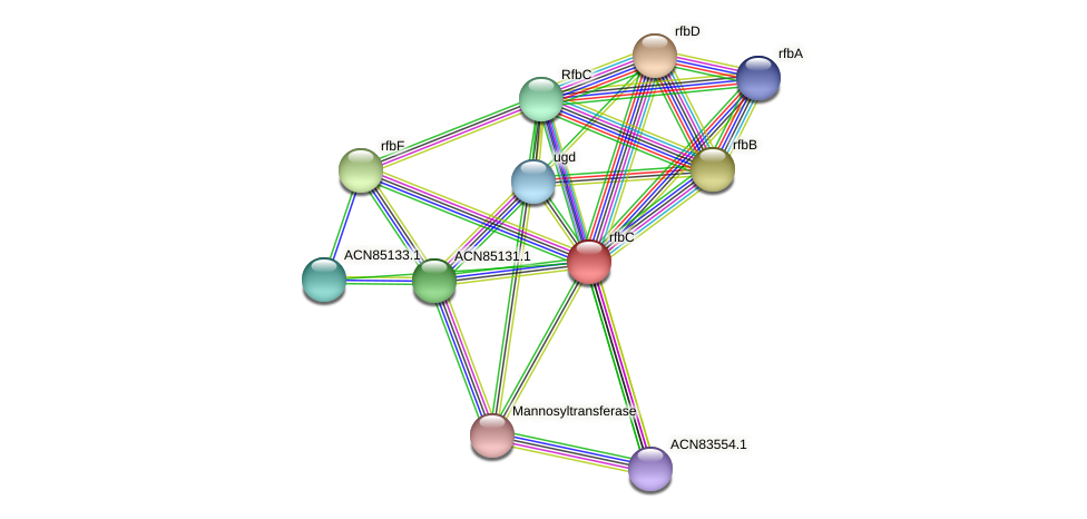ACN85132.1 protein (Brachyspira hyodysenteriae) - STRING interaction network