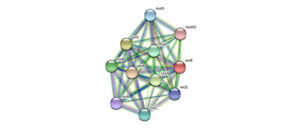 uvrB protein (Acidaminococcus intestini) - STRING interaction network