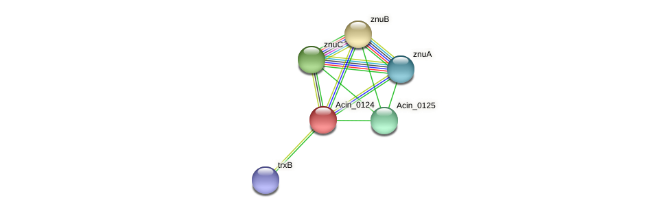 Acin_0124 protein (Acidaminococcus intestini) - STRING interaction network