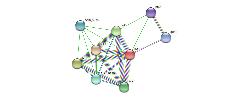 livG protein (Acidaminococcus intestini) - STRING interaction network