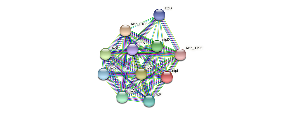 ntpI protein (Acidaminococcus intestini) - STRING interaction network