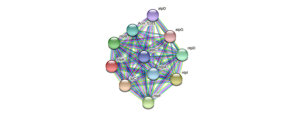 ntpK protein (Acidaminococcus intestini) - STRING interaction network