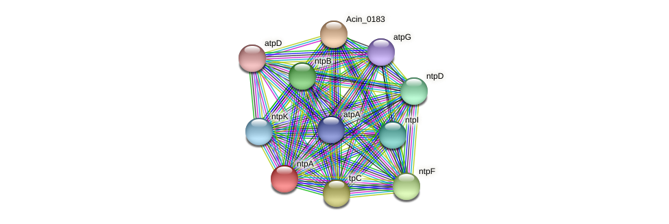 ntpA protein (Acidaminococcus intestini) - STRING interaction network