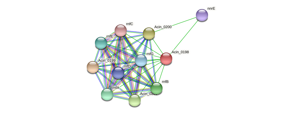 Acin_0198 protein (Acidaminococcus intestini) - STRING interaction network