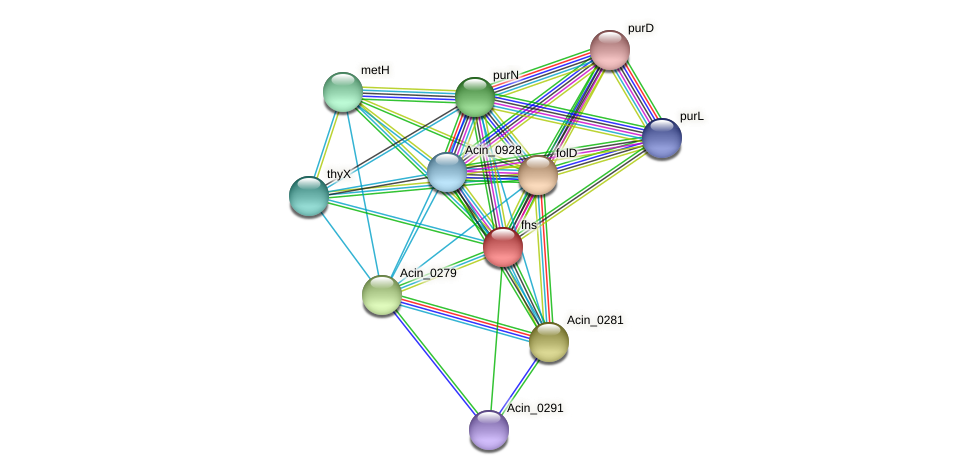 fhs protein (Acidaminococcus intestini) - STRING interaction network