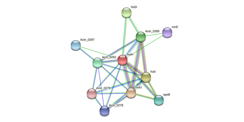 hutH protein (Acidaminococcus intestini) - STRING interaction network