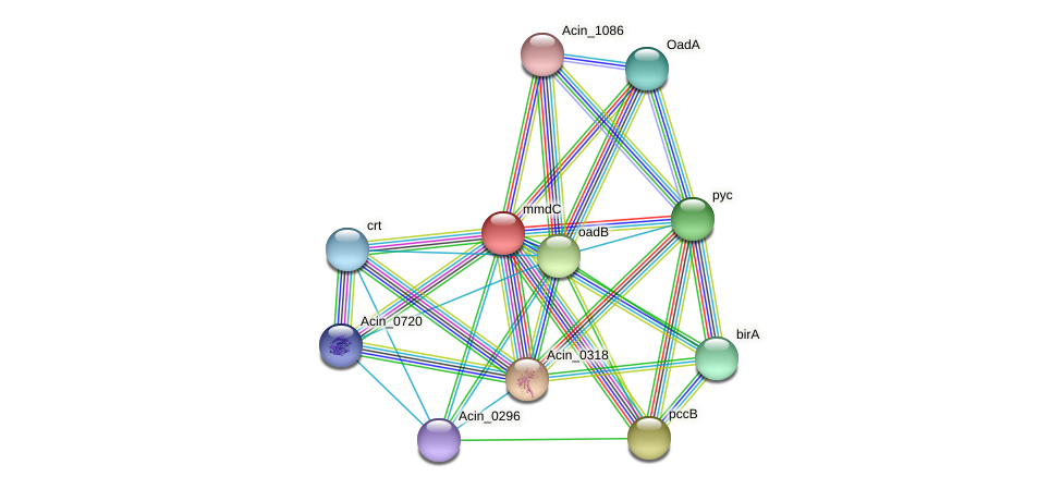 mmdC protein (Acidaminococcus intestini) - STRING interaction network