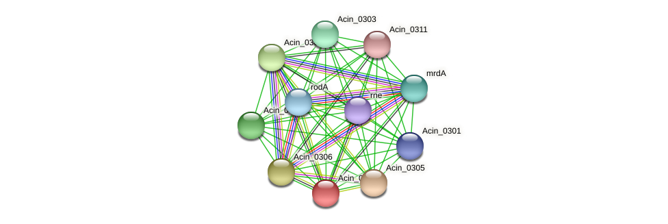 Acin_0304 protein (Acidaminococcus intestini) - STRING interaction network