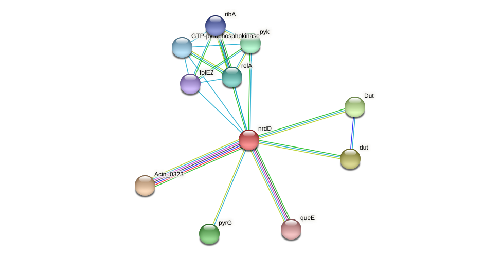 nrdD protein (Acidaminococcus intestini) - STRING interaction network