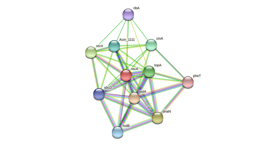recA protein (Acidaminococcus intestini) - STRING interaction network