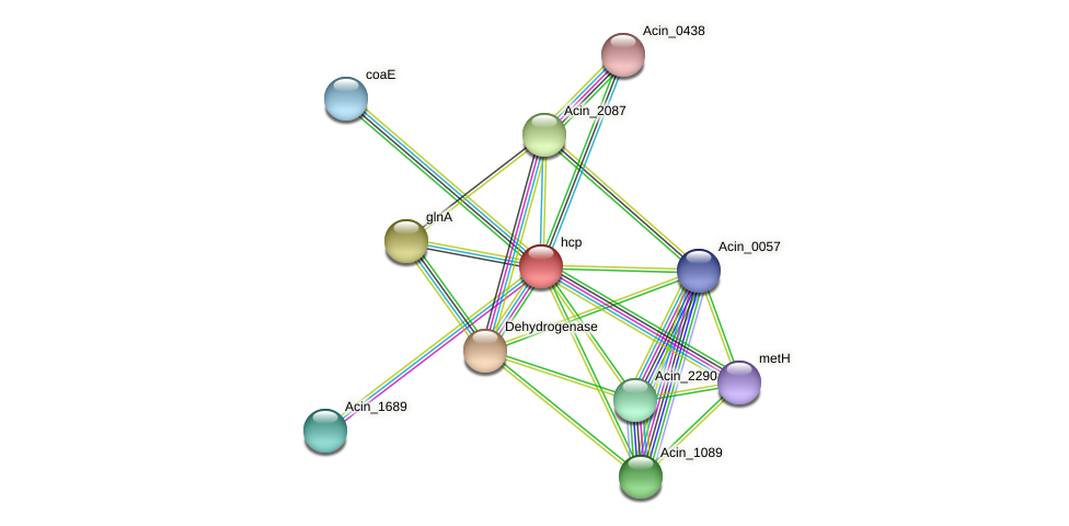 hcp protein (Acidaminococcus intestini) - STRING interaction network