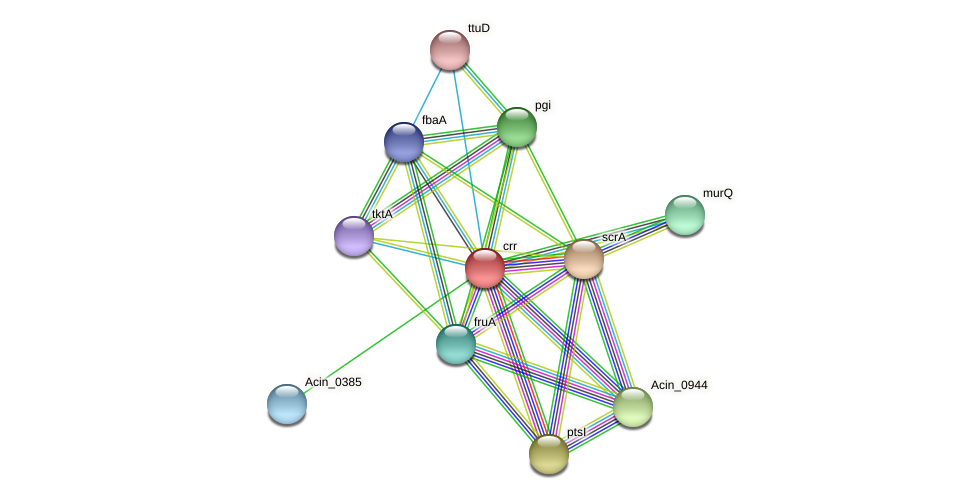 crr protein (Acidaminococcus intestini) - STRING interaction network