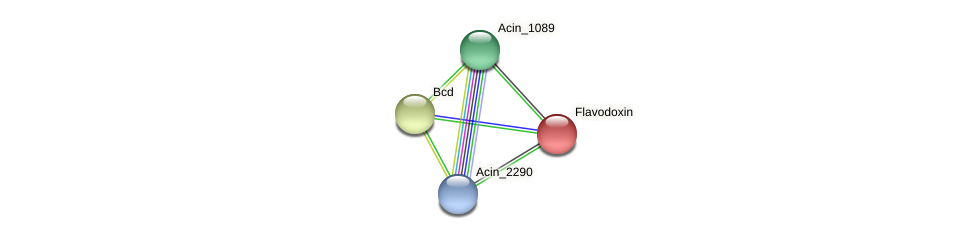 Acin_0488 protein (Acidaminococcus intestini) - STRING interaction network