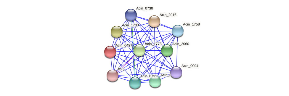 Acin_0497 protein (Acidaminococcus intestini) - STRING interaction network