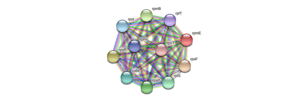 rpmE protein (Acidaminococcus intestini) - STRING interaction network