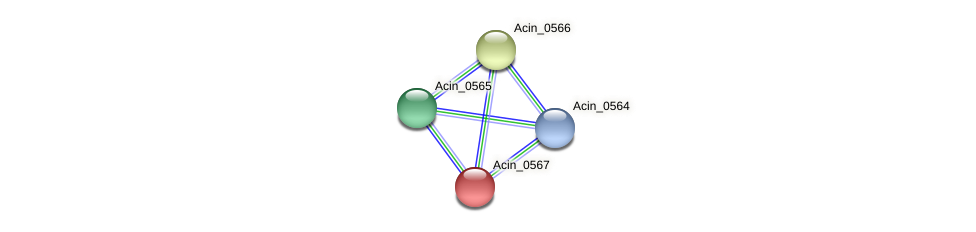 Acin_0567 protein (Acidaminococcus intestini) - STRING interaction network
