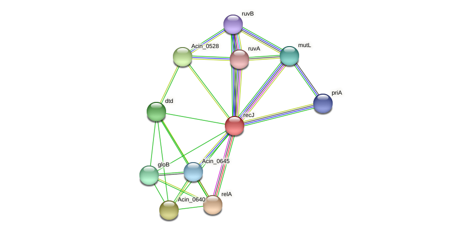 recJ protein (Acidaminococcus intestini) - STRING interaction network