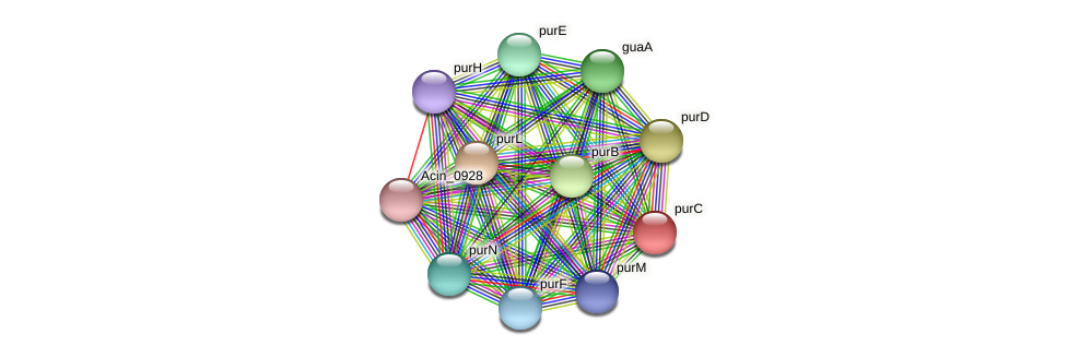 purC protein (Acidaminococcus intestini) - STRING interaction network