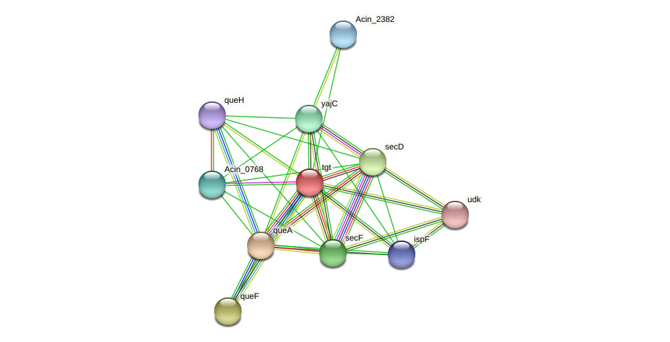 tgt protein (Acidaminococcus intestini) - STRING interaction network