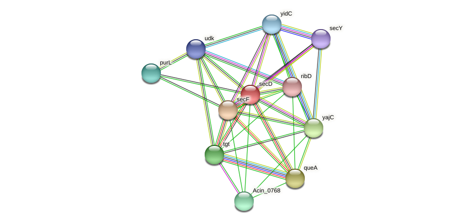 secD protein (Acidaminococcus intestini) - STRING interaction network