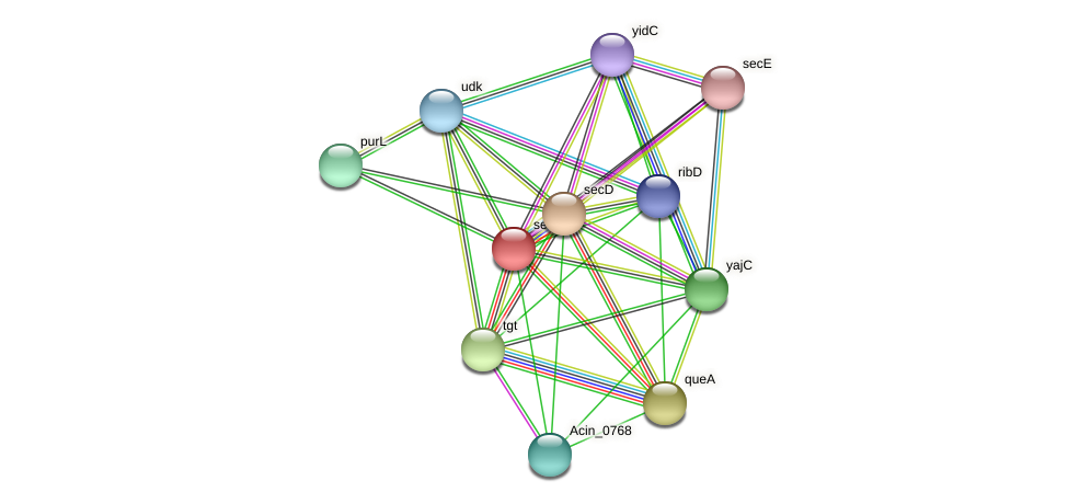 secF protein (Acidaminococcus intestini) - STRING interaction network