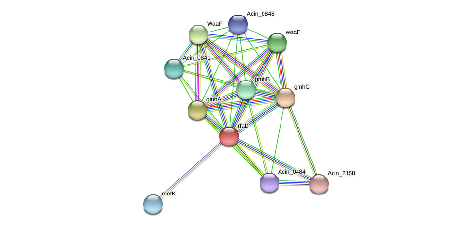 hldD protein (Acidaminococcus intestini) - STRING interaction network