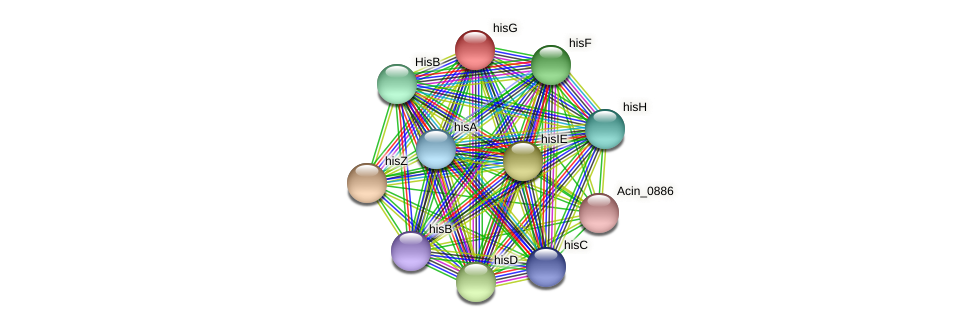 hisG protein (Acidaminococcus intestini) - STRING interaction network