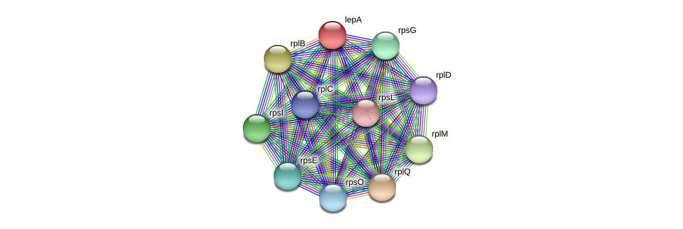 lepA protein (Acidaminococcus intestini) - STRING interaction network