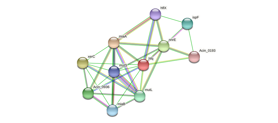hfq protein (Acidaminococcus intestini) - STRING interaction network