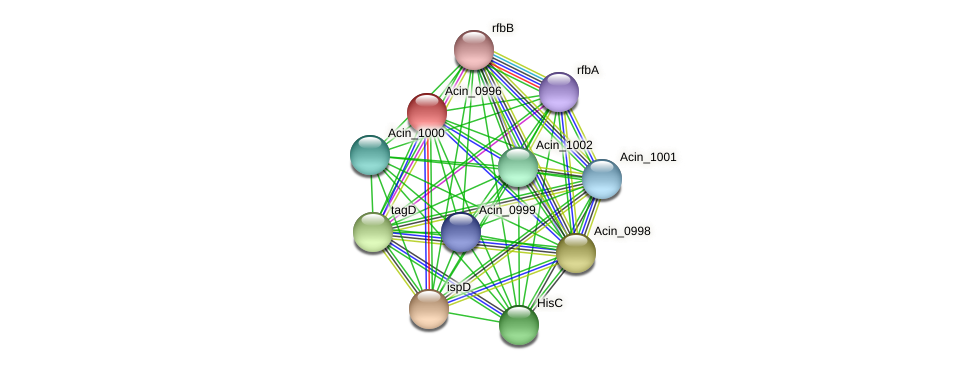 Acin_0996 protein (Acidaminococcus intestini) - STRING interaction network