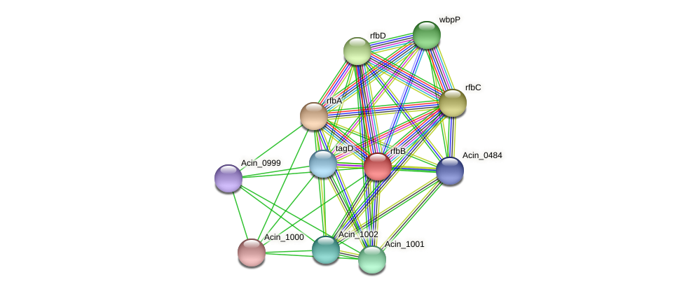 rfbB protein (Acidaminococcus intestini) - STRING interaction network