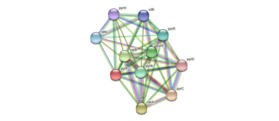 pyrF protein (Acidaminococcus intestini) - STRING interaction network