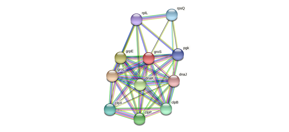 groS protein (Acidaminococcus intestini) - STRING interaction network