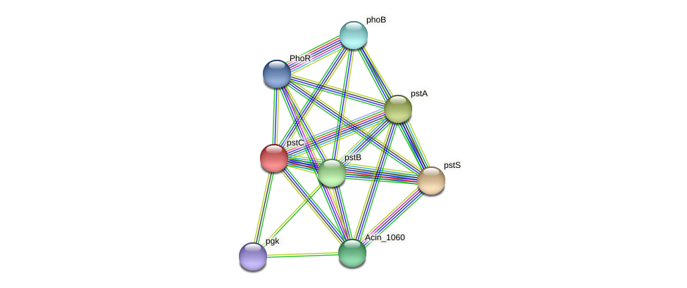 pstC protein (Acidaminococcus intestini) - STRING interaction network