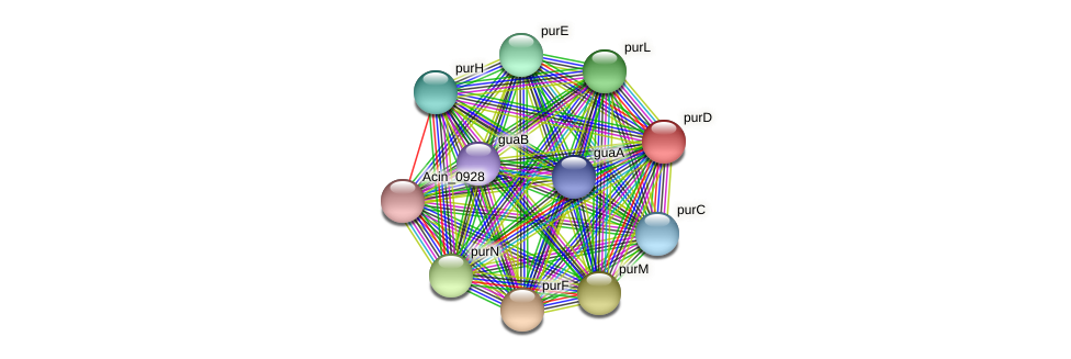 purD protein (Acidaminococcus intestini) - STRING interaction network