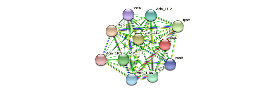 argR protein (Acidaminococcus intestini) - STRING interaction network