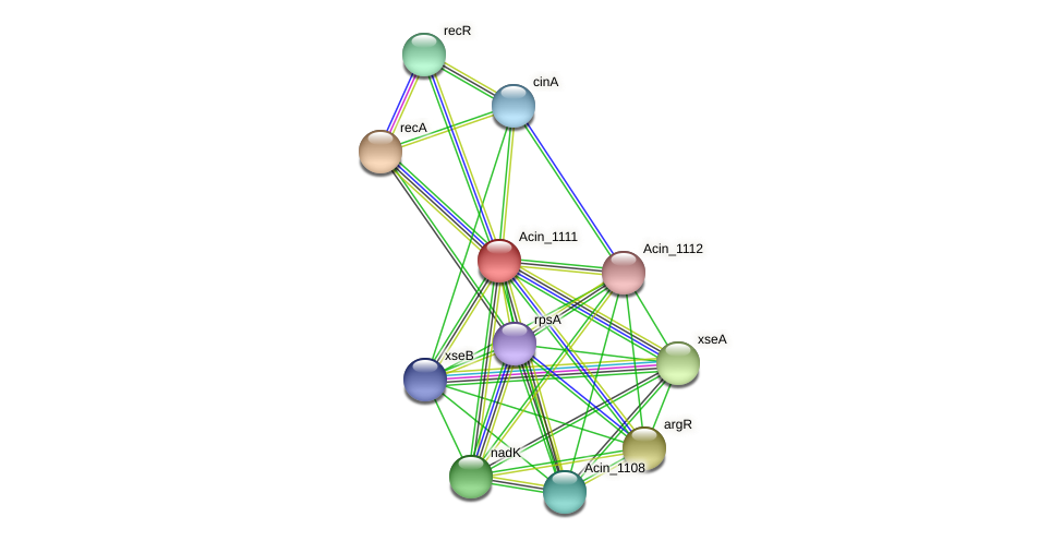 Acin_1111 protein (Acidaminococcus intestini) - STRING interaction network