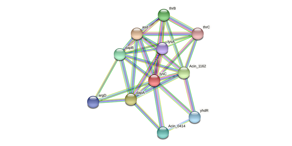 lysC protein (Acidaminococcus intestini) - STRING interaction network