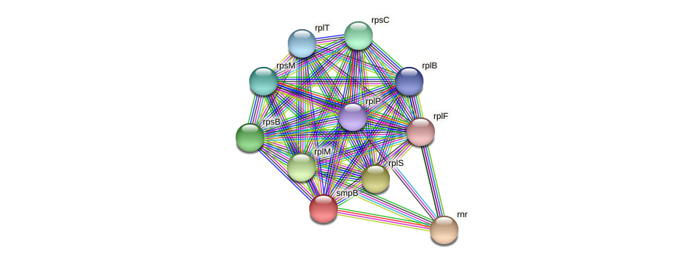 smpB protein (Acidaminococcus intestini) - STRING interaction network