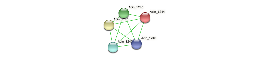 Acin_1244 protein (Acidaminococcus intestini) - STRING interaction network