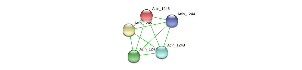 Acin_1246 protein (Acidaminococcus intestini) - STRING interaction network
